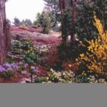 Horticultural Garden